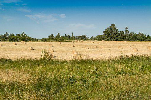 Field, Agriculture, Nature, Hay, Countryside, Tree