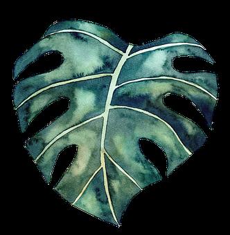 Leaf, Monstera, Watercolor, Monstera Plant