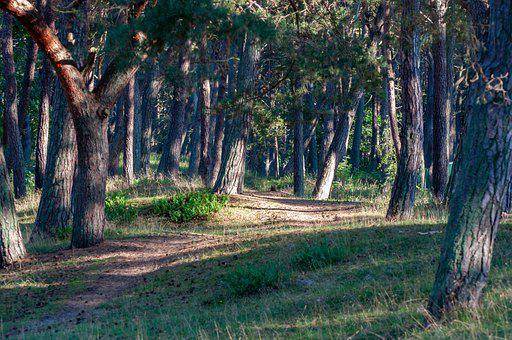 Forest, Nature, Outdoors, Woods, Wilderness, Trees