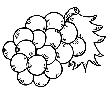 Cherries, Fruits, Line Art, Cut Out, Food, Organic