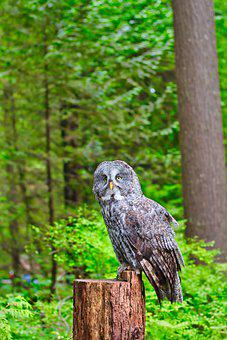 Owl, Bird, Perched, Bird Of Prey, Animal, Feathers