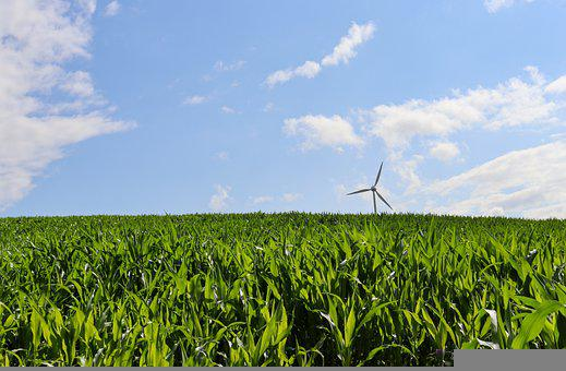 Cornfield, Wind Energy, Pinwheel, Nature, Agriculture
