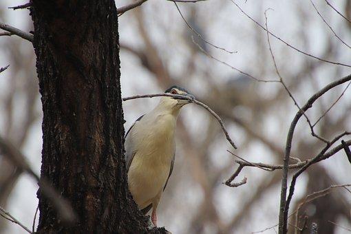 Heron, Bird, Perched, Animal, Feathers, Plumage, Beak