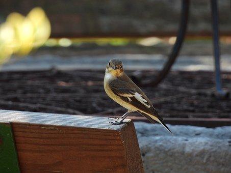 Bird, Perched, Animal, Feathers, Plumage, Beak, Bill