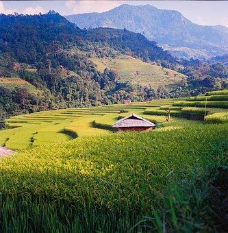 Rice Terraces, Agriculture, Vietnam, Farming, Field