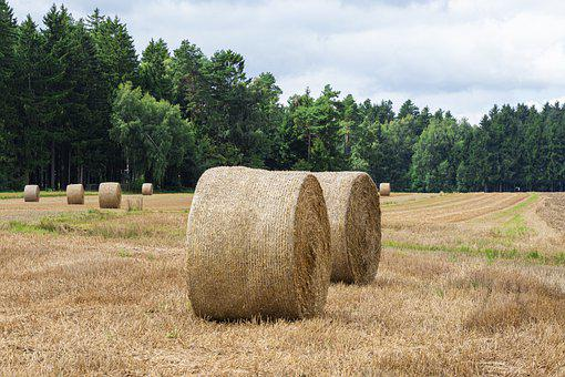 Hay, Bale, Field, Farm, Round Bale, Straw, Harvest