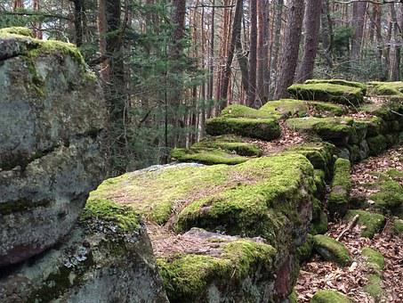 Wall, Moss, Forest, Alsace, Green, Nature, Plant, Old
