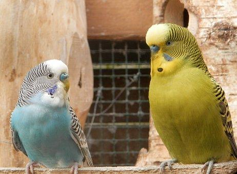 Parakeet, Parrots, Nature, Animals, Birds, Nest
