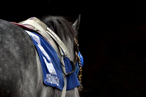 Horse, Arlington Park, Arlington, Horse Racing