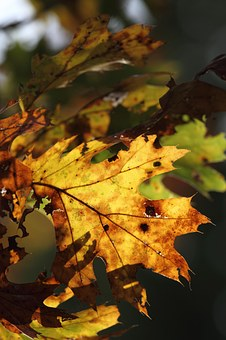 Leaf, Autumn, Autumn Leaves, Fall, Nature, Red, Yellow