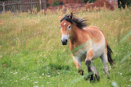 Horse, Cold Blooded Animals, Annual, Race, Great