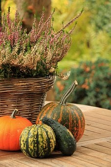 Pumpkin, Fruits, Colorful, Color, Deco, Nature, Autumn