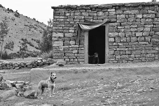 Dog, Farm, Boy, Home, House, Poor, Farmland