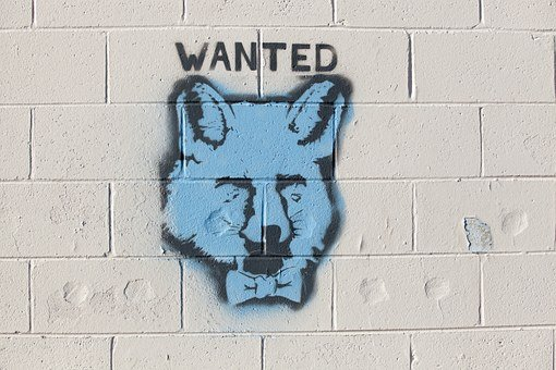 Graffiti, Fox, Wanted, Brick, Wall, Spraypaint, Spray