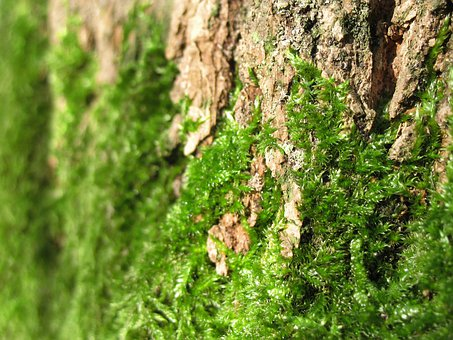 Mosses, Green, Plants, Tree, Barks, Growths, Growing