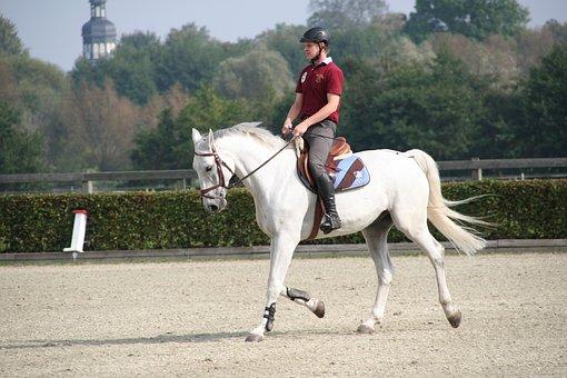 Reiter, Horse, Dressage, Saddle, Mold
