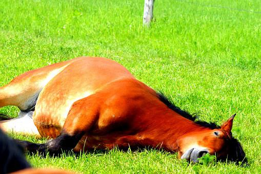 The Horse, Grass, Pasture Land, Horses, Meadow, Animal