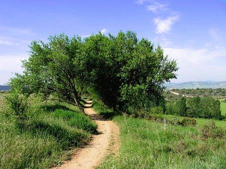 Hanson, Sand Road, Narrow, Hiking, Trail, Hike