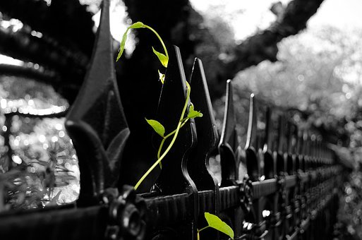 Leaves, Leaf, Plant, Green, Season, Spring, Summer