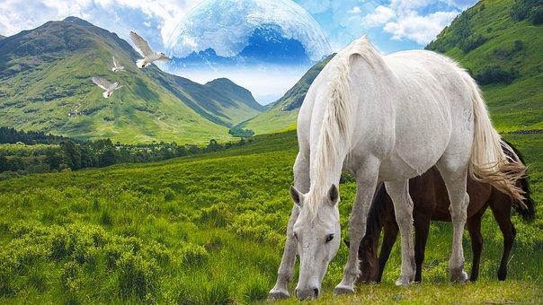 Horse, Stallion, Freedom, Mountain, Nature, Wild