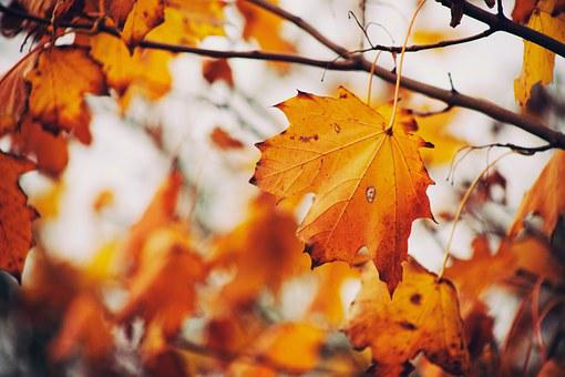 Autumn, Leaves, Fall, Tree, Colors, Colours, Nature
