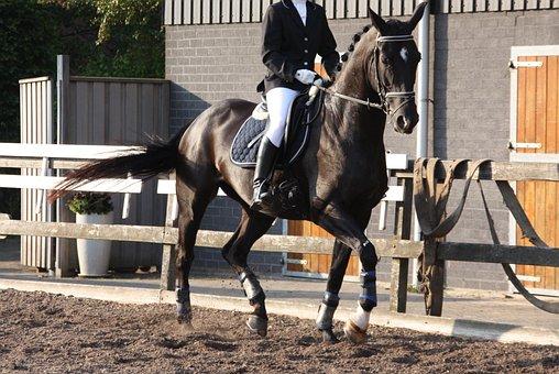 Dressage, Equestrian, Rap, Horse, Trot