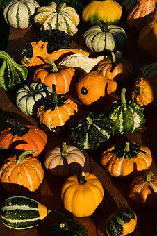 Decorative Squashes, Pumpkins, Yellow, Beautiful