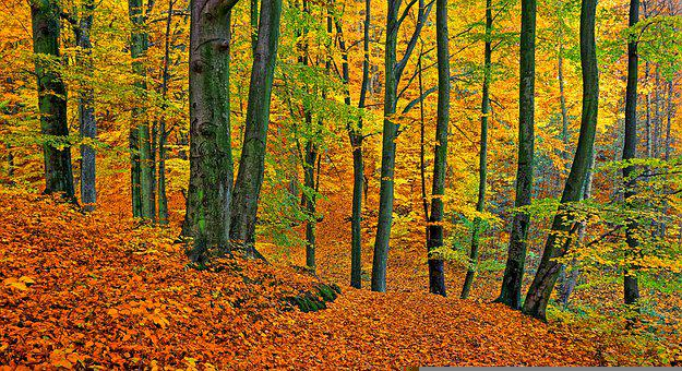 Forest, Park, Autumn, Trees, Nature, Landscape, Woods