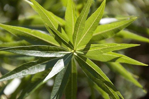 Leaves, Plant, Foliage, Green, Nature, Closeup