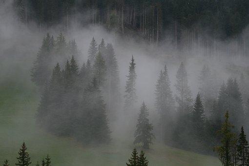 Fog, Forest, Woods, Nature, Trees, Landscape