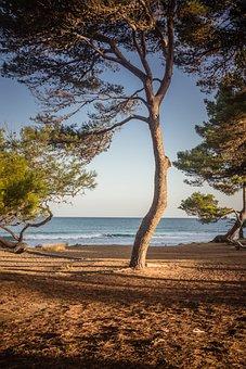 Tree, Beach, Sea, Nature, Ocean, Outdoors