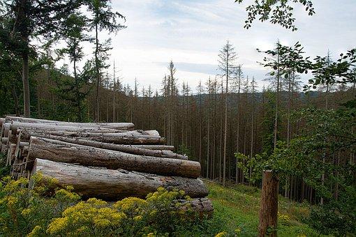 Forest, Forest Dieback, Trees, Landscape, Nature, Woods