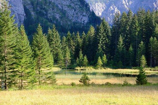 Forest, Mountains, Nature, Landscape