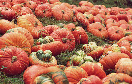 Pumpkins, Pumpkin Patch, Harvest, Vegetables, Fall