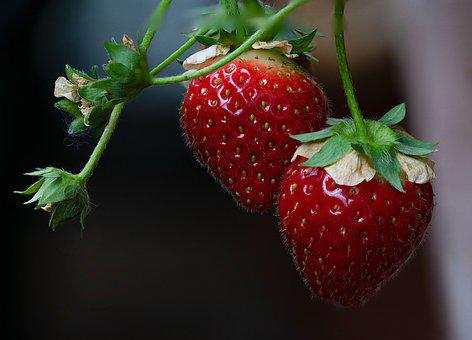 Strawberries, Berries, Fruits, Food, Fresh, Healthy