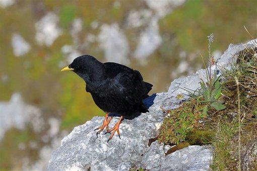 Crow, Bird, Sitting, Animal, Black Bird, Feathers