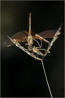 Dragonfly, Wings, Bug, Insect, Leaf, Foliage, Plant