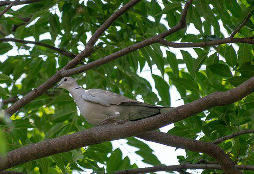 Dove, Bird, Perched, Animal, Feathers, Plumage, Beak
