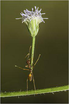 Ant, Insect, Flower, Garden, Macro, Nature