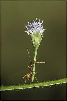 Ant, Insect, Flower, Plant, Garden