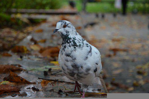 Pigeon, Bird, Perched, Animal, Feathers, Plumage, Beak