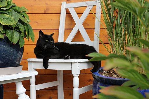 Cat, Pet, Chair, Black Cat, Animal, Domestic, Feline