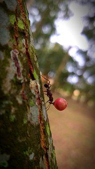 Ant, Insect, Trunk, Wood, Tree, Plant, Nature, Macro
