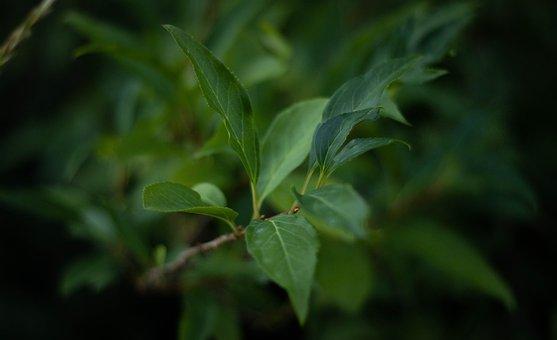 Leaves, Plant, Foliage, Green, Branch, Nature, Bokeh