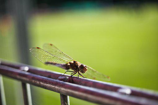 Dragonfly, Darter, Insect, Wings, Steel, Metal, Closeup