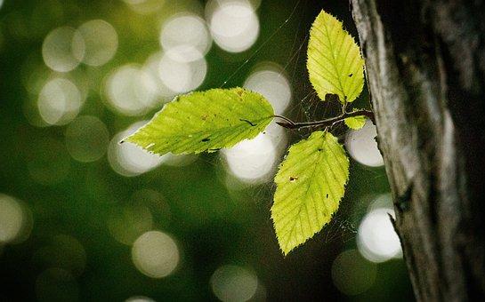 Leaves, Trunk, Spider Web, Foliage, Green, Cob Web