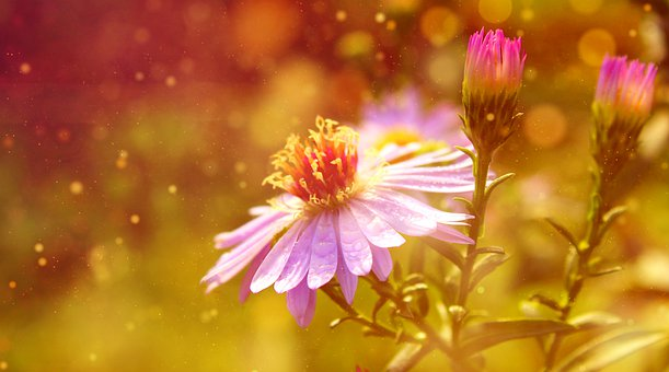 Flowers, Garden, Nature, Flowering, Bloom, Blossom