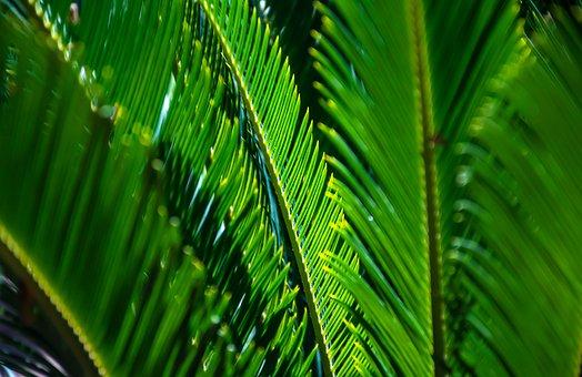 Palm, Leaves, Plant, Foliage, Green, Nature, Light