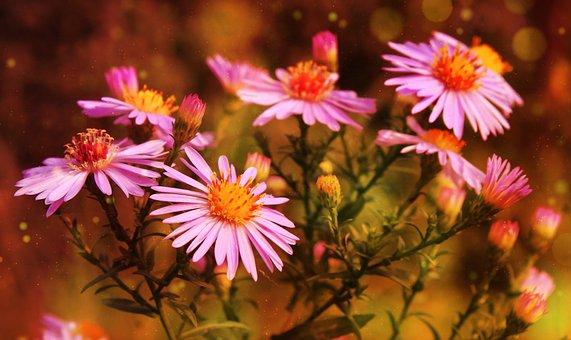 Flowers, Bloom, Botany, Blossom, Garden, Nature