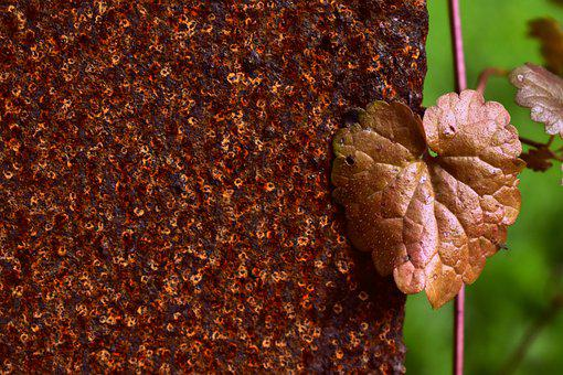 Metal, Rust, Leaf, Plant, Weathered, Old, Iron, Texture